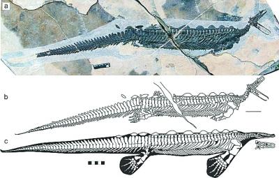 这是远古爬行动物进化的重要论据,相关研究成果在《自然》杂志子刊